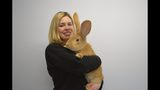 This huge rabbit is looking for a home