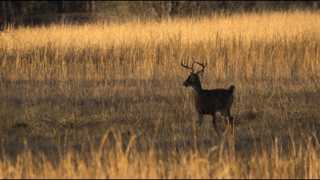 Fewer buck-only zones this year for Minnesota deer hunters   KARE11.com