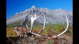 PHOTOS: U.S. National Parks celebrate 100 years