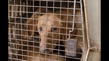 PHOTOS: Dogs rescued from WI residence