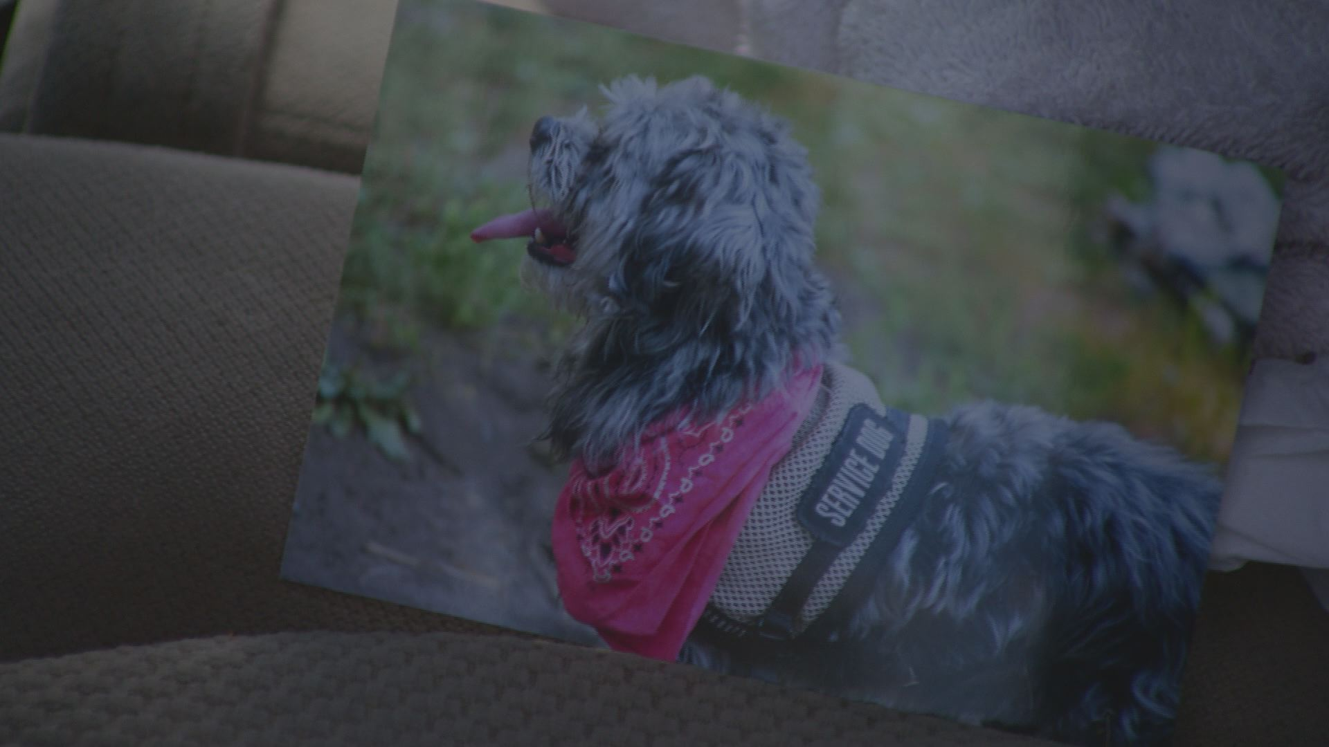 Service dog stolen from Vietnam Veteran