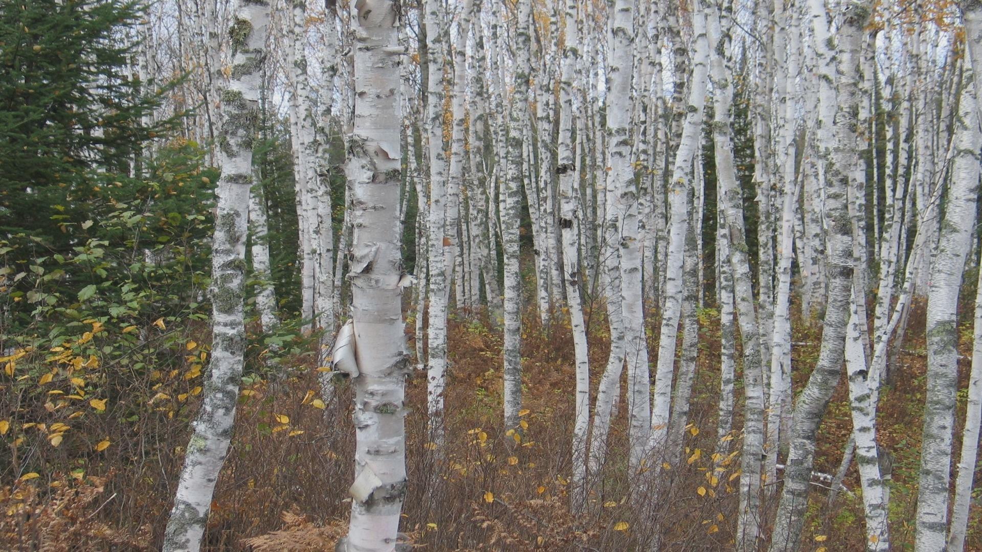 Tree Planting Tips - Wisconsin DNR